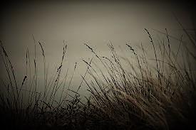 tall grass (3)